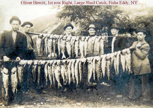 Large shad catch fishs eddy ca 1916 delaware county ny for Fishs eddy ny